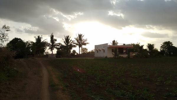 Walikar's Farm, Ballolli's Logo